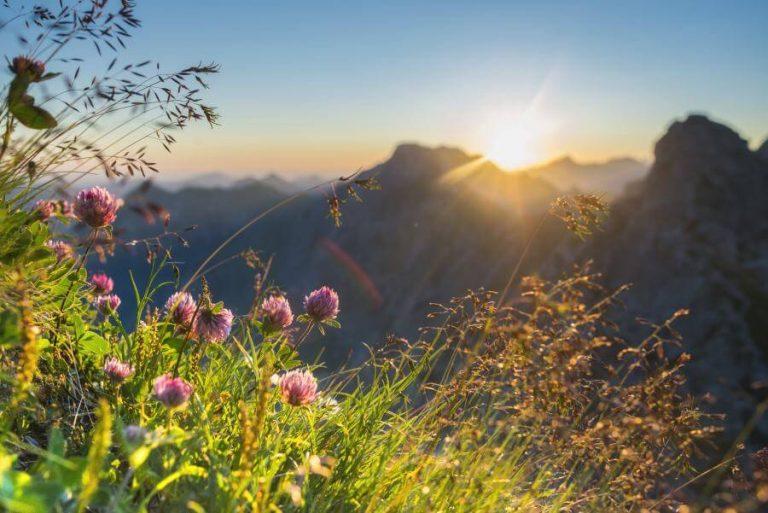 Panorama Allgäu Alpen Berge Oberstdorf Sommer Alpenglühen Sonnenuntergang Blumen Bergblumen Oberallgäu