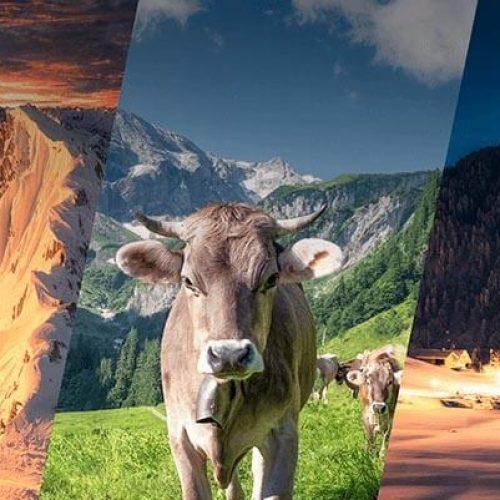 Landschaftsfotograf Jonathan Besler Shop Meine Lieblingsmotive Landschaftsbilder Kuh Bilder Allgäu