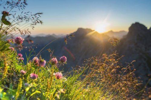 Landschaftsfotograf Jonathan BeslerPanorama Allgäu Alpen Berge Oberstdorf Sommer Alpenglühen Sonnenuntergang Blumen Bergblumen