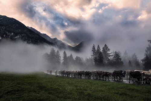 Landschaftsfotograf Landschaftsfotografie Fotografie Landschaft Natur Zeit Panorama Allgäu Alpen Berge Kuh Braunvieh Vieh Rind Rinder Kühe Viehscheid Alp Alm Abtrieb Bergsommer Hinterstein Oberallgäu
